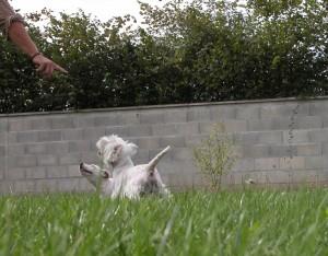 dominer et soumettre votre chien