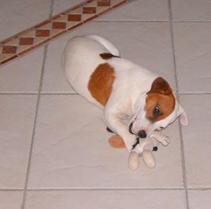 jouer pour le chien
