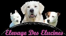 Pension Canine, Elevage de Golden, Westie, Parson, Jack Russel dans le 64