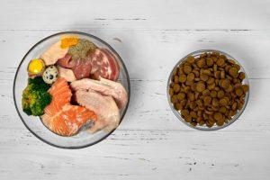 quelle alimentation de qualité pour votre chien