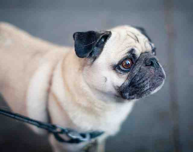 Comment choisir le collier pour votre chien?