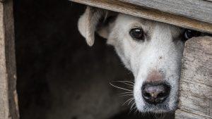 Un chenil pour chien