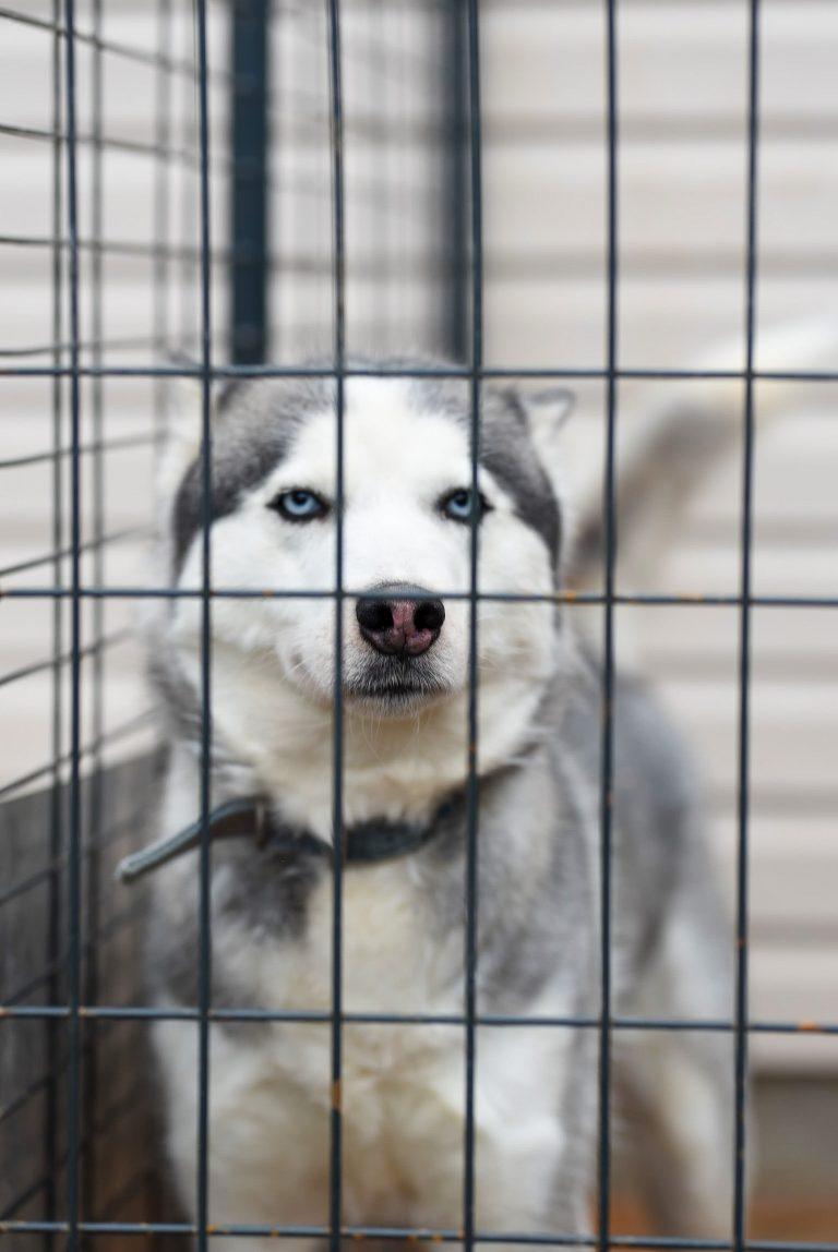 Une niche pour chien