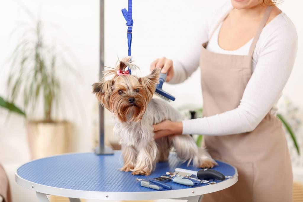 Le brossage, la pré-tonte ou pré-coupe pour dégrossir le pelage.
