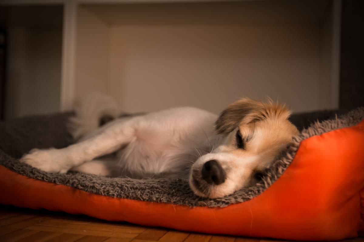 comment-eduquer-un-chiot-a-dormir-dans-son-panier